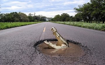 road, the situation, crocodile, situeyshen
