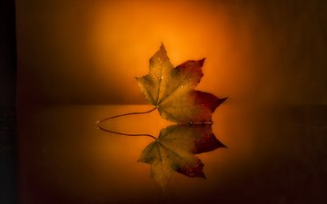 reflection, background, sheet, surface, autumn