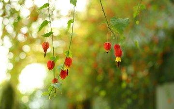 цветы, природа, макро, фон