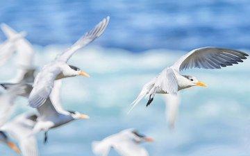 море, полет, крылья, чайка, птицы, клюв, чайки