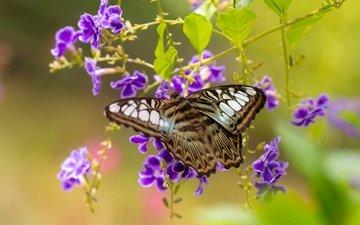 цветы, бабочка, крылья