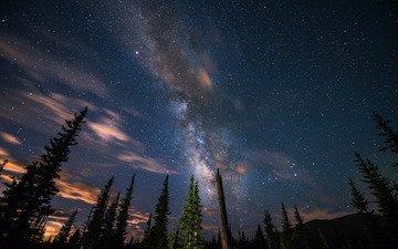 небо, деревья, звезды, силуэты, млечный путь