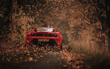 leaves, autumn, red, car, ferrari, 430 scuderia
