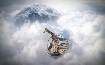giraffe, finearts, sky sailor, photo manipulation