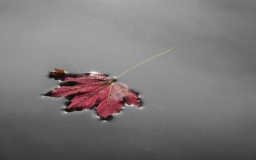 вода, природа, осень, лист