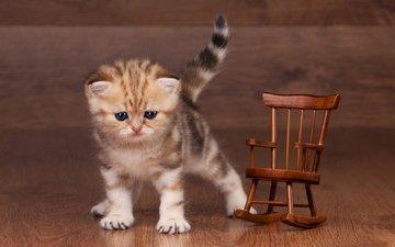 кошка, котенок, маленький, игрушка, пол, полосатый, ламинат, кресло-качалка