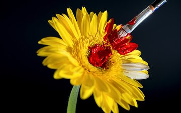 цветок, краска, кисть, кисточка
