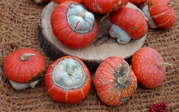 осень, урожай, плоды, тыквы, выставка