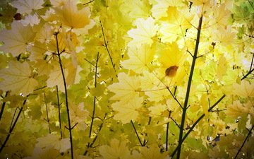 природа, листья, осень