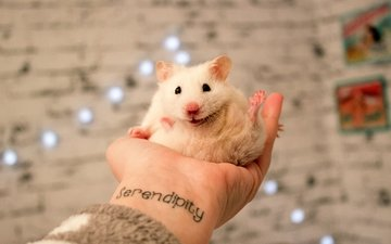 hand, white, tattoo, hamster