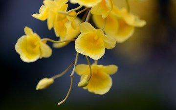 цветы, ветка, фокус камеры, желтые