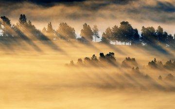 деревья, лес, утро, туман, поле