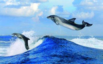облака, волны, море, горизонт, дельфины