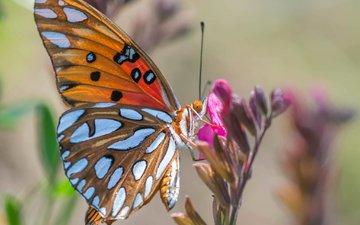 природа, насекомое, цветок, бабочка, растение, мотылек