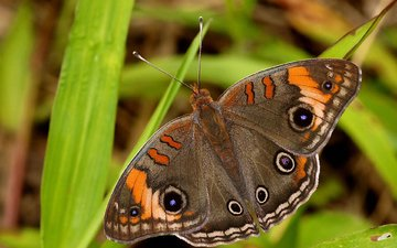 природа, животные, бабочка, красота