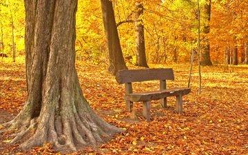 деревья, листья, парк, осень, скамейка, клен, опадают, осен, листья, дерево