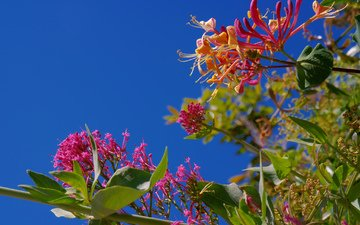 the sky, flowers, leaves, branches