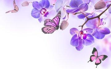 цветы, бабочки, орхидея, цветы, butterflies, орхидею, весенние, лиловая
