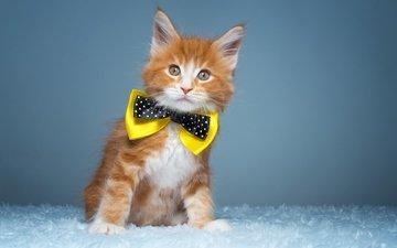 кот, мордочка, усы, кошка, взгляд, бабочка, котенок, рыжий, мейн-кун