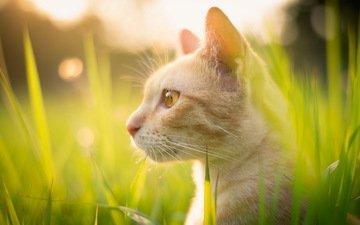трава, природа, кот, лето, кошка, взгляд, профиль, смотрите