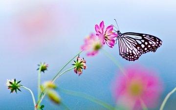 цветок, бабочка, цветком