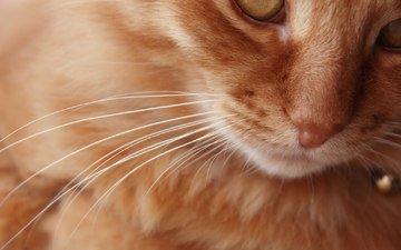 кот, усы, кошак, котяра