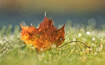 природа, осень, лист