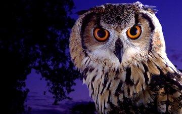 глаза, ночь, сова, взгляд, птица, сумерки, филин
