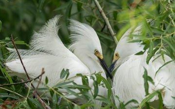nature, birds, beak, feathers, heron