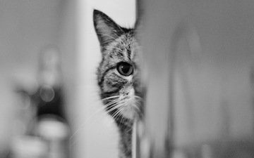 глаза, взгляд, кошак, котяра
