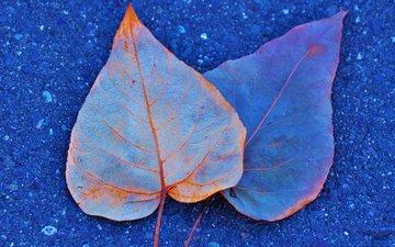 листья, краски, осень, асфальт