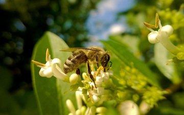 насекомое, пчела, мед, пыльца