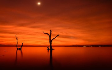 ночь, деревья, огни, озеро, луна