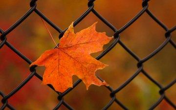 природа, осень, лист, сетка