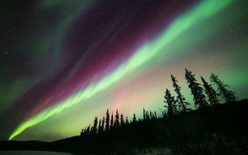 небо, деревья, огни, природа, звезды, северное сияние, силуэты, aurora borealis