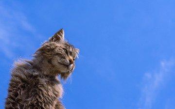 фон, кот, кошак, потрепанный