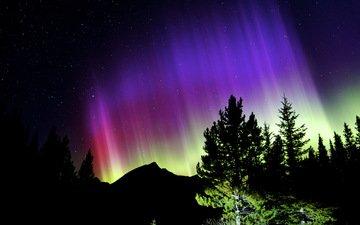 небо, ночь, цвета, силуэты, аврора