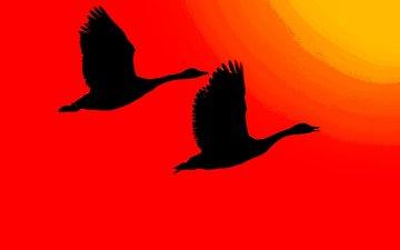 свет, солнце, крылья, птицы, силуэт, зарево