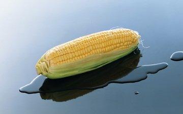 вода, природа, кукуруза, початок