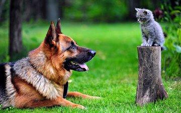 парк, кот, кошка, собака, cобака
