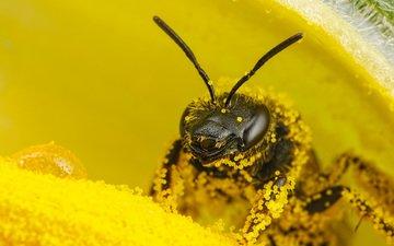 цветок, пчела, пыльца