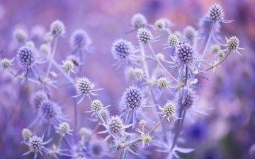 leaves, macro, background, flower, field, meadow, plant, stem