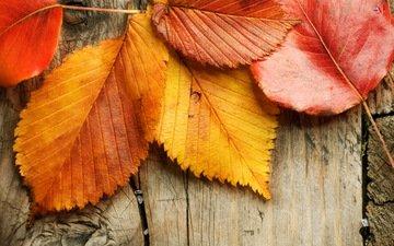 листья, осень, дерева, опадают, осен, листья