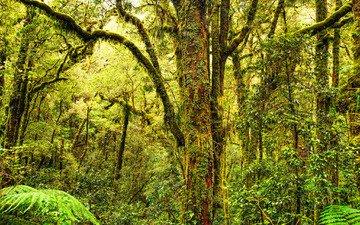 деревья, лес, мох, деревь, грин