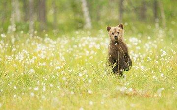 flowers, grass, nature, bear, observation