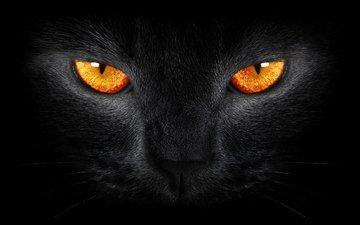 глаза, кот, кошка, взгляд, черный фон, блака, черный кот
