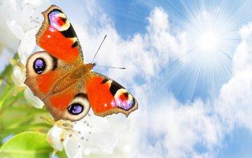 небо, облака, солнце, природа, лучи, бабочка, белые, цветочки