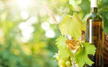 виноград, бокал, вино, бутылка, солнечные лучи