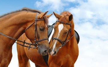 небо, лошади, кони, голубая, неба