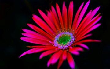 природа, фон, цветок, лепестки, растение